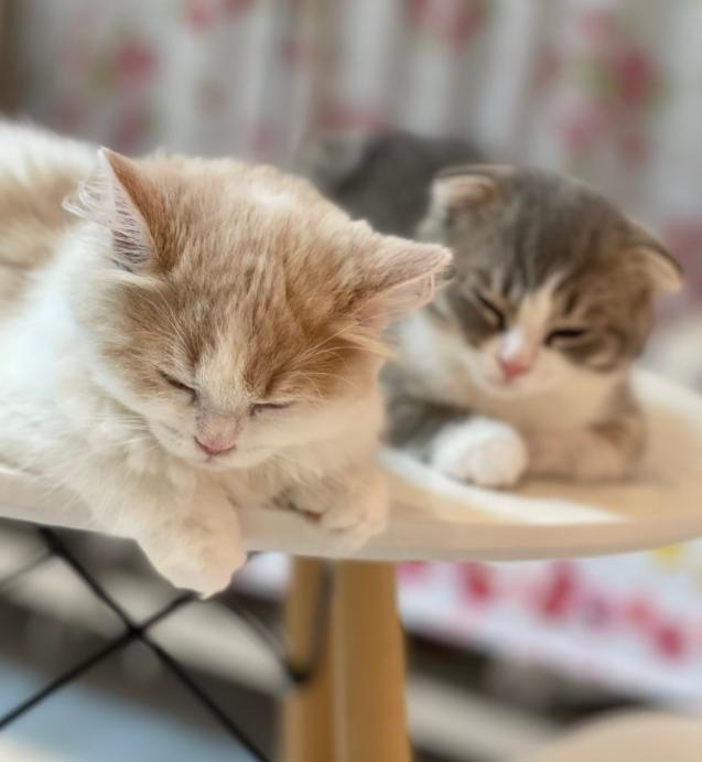 CAT CAFE 猫ちゃんといっしょのメイン画像1