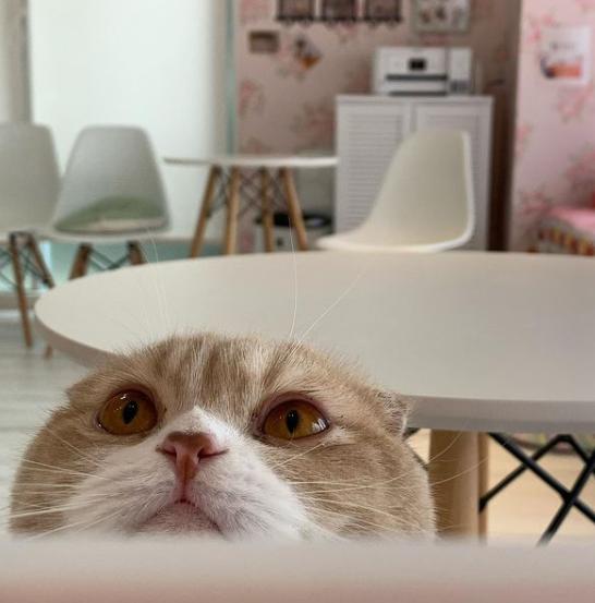 CAT CAFE 猫ちゃんといっしょのメイン画像2