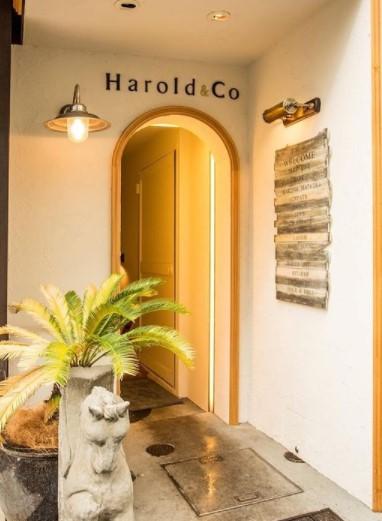 表参道Harold&Coのメイン画像1